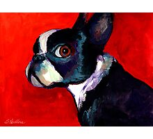 Boston Terrier Portrait 2 painting Svetlana Novikova Photographic Print