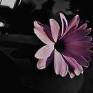 Dark Beauty on a Bin (please view LARGE) by Jen Waltmon