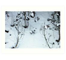 Snow scene, Jigokudani Art Print