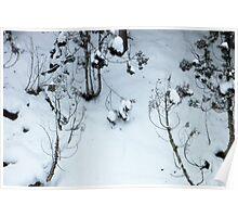 Snow scene, Jigokudani Poster