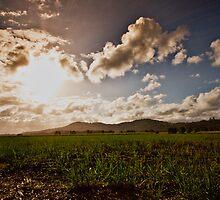 tumbulgum cane fields by Tim Richardson