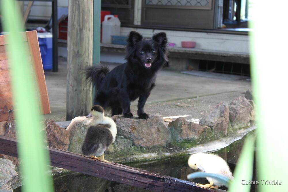 Ducks come play.. Please by Cathie Trimble