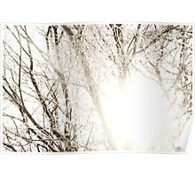 Sun shining through frosty tree branches Poster