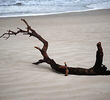 Driftwood - Steve by littleribbons