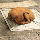 It's a tough life.... by Kristi Robertson
