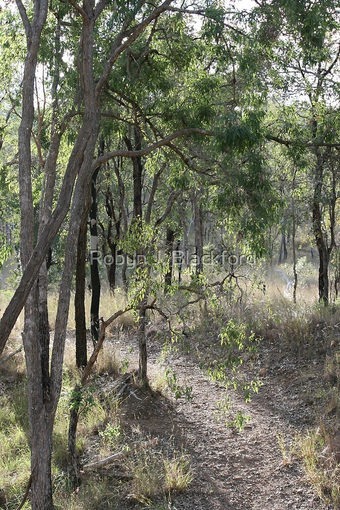 Aussie Bush Hiking Track by aussiebushstick