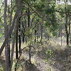 Aussie Bush Hiking Track by aussiebushstick