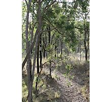 Aussie Bush Hiking Track Photographic Print
