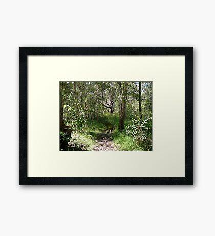 Red Rock Reserve Hiking Track Framed Print