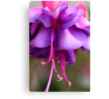 Fuschia Fun Canvas Print