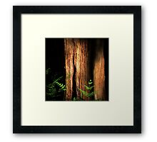Epping Glade Framed Print