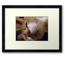 Sleeping Timmy Framed Print