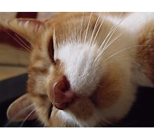 Sleeping Timmy Photographic Print
