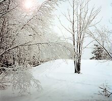 Snow Trees by andykazie