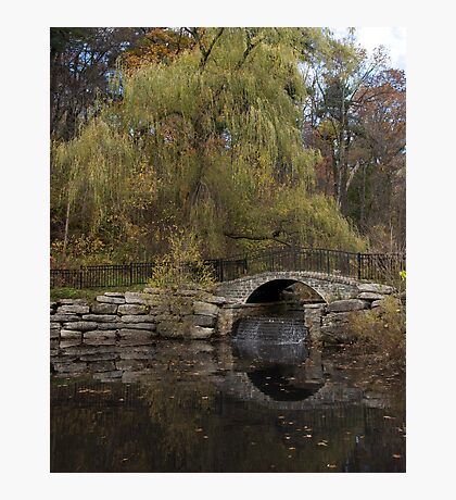 Willow Crossing Photographic Print