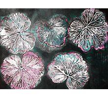 Novembers Garden 2 - Monoprint Photographic Print