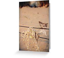Sunset Butterflies Greeting Card