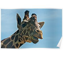 Giraffe SAYING Hello Poster