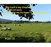 Restful Pastures Photographic Print