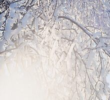 Wintersun and snow covered branches by intensivelight