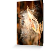 REDREAMING MILKWEED IN GOLD Greeting Card
