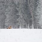 Red fox in snowfall by Remo Savisaar