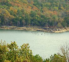 NW Arkansas' Beaver Lake, in need of rains by David  Hughes