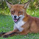 A fox is a wolf who sends flowers ... quote by  Ruth Weston by John44