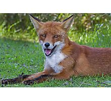 A fox is a wolf who sends flowers ... quote by  Ruth Weston Photographic Print