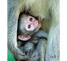 Vervet Monkey Photographic Print
