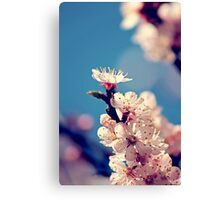 Kissed by the sun Canvas Print