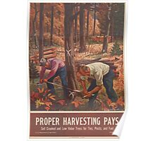 United States Department of Agriculture Poster 0162 Proper Harvesting Pays Sell Crooked Low Value Trees for Ties Posts Fuel Poster