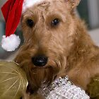 Irish Terrier Christmas by Trish  Anderson