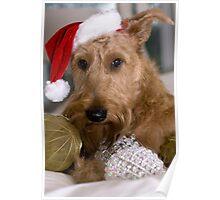 Irish Terrier Christmas Poster