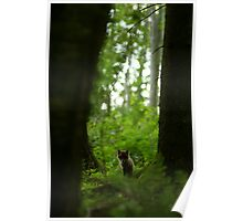 Lonely red fox puppy in forest Poster