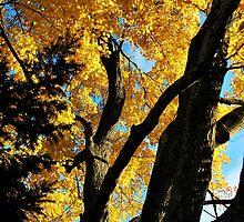 golden light  by Jeff Stroud