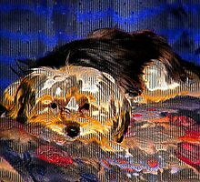 Bayle Gone Wild- Toto by Linda Miller Gesualdo