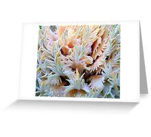 Cycad coral Greeting Card