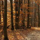 Leaves of Gold by bicyclegirl
