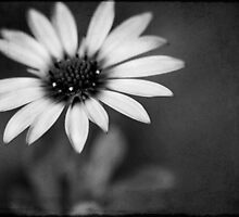 simply daisy by Ingz