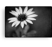 simply daisy Canvas Print