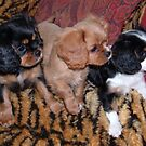 Cavalier Sisters Three : Where is Charlie Going ???? by AnnDixon