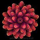Flower by Ingrid Funk