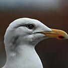 Herring Gull by larry flewers