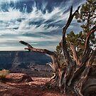 Arches Vista by Bill McCarroll