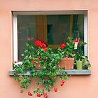 Window Flower Garden by phil decocco