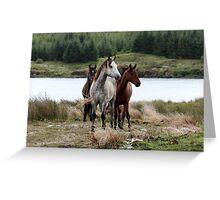 Connemara Ponies in the wild in Connemara, Ireland Greeting Card