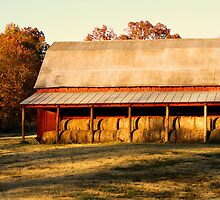 The Golden Colors of Fall by Susan Blevins