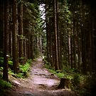tlo 010 - la forêt by Antoine Piron