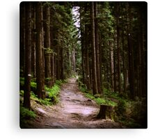 tlo 010 - la forêt Canvas Print